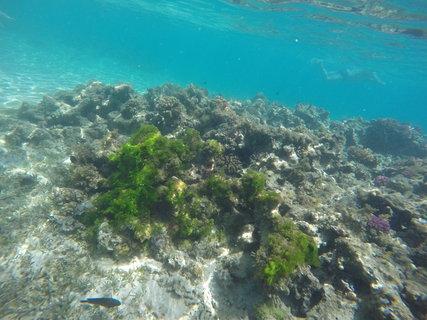FOTKA - Šnorchlování u ostrova Giftun
