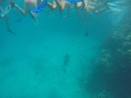 FOTKA - Potápěč na dně krmí ryby