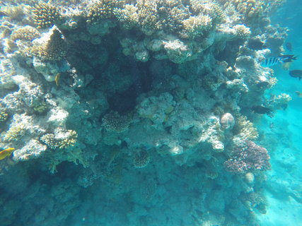 FOTKA - Rudé moře, korály, sasanky a barevné ryby