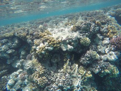 FOTKA - Pod hladinou rudého moře