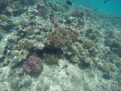 FOTKA - Rudé moře - barevný podmořský svět