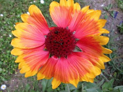 FOTKA - kvetl u školky