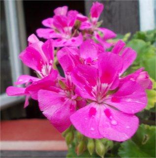 FOTKA - zářivě růžový