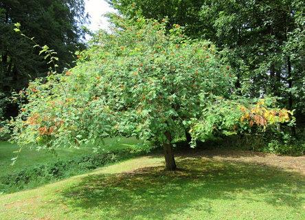 FOTKA - strom v parku u z�mku ve Vizovic�ch