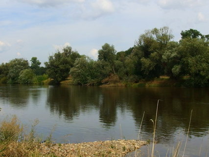 FOTKA - Pohled na řeku s topoly