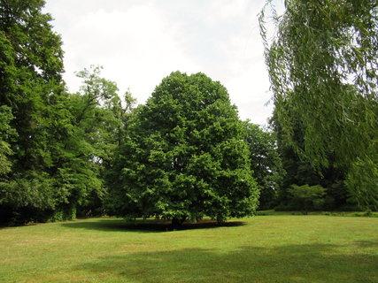 FOTKA - zámek Vizovice.. park s hezkým stromem
