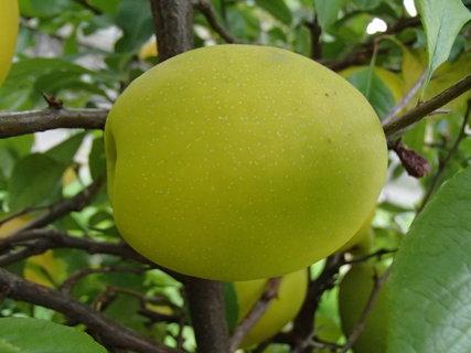 FOTKA - vyzerá ako citrón