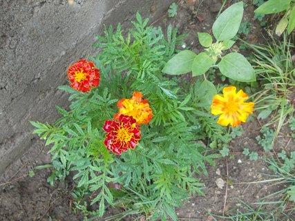 FOTKA - 4 květy každý je jiný