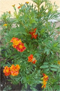 FOTKA - jeden květ je schovaný v listech