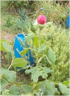 FOTKA - u máty kvetu