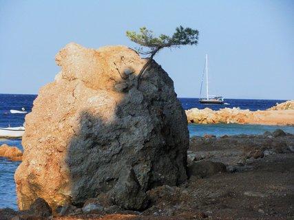 FOTKA - Bonsai na kameni