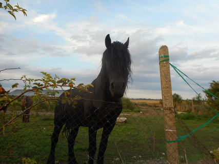 FOTKA - černý kůň