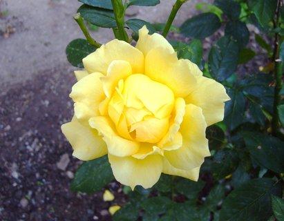 FOTKA - ..žlutá