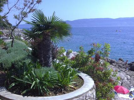 FOTKA - Palmy podél pobřeží