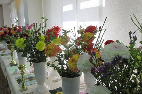 FOTKA -  Jiřiny byly považovány za květy symbolizující boha Slunce.