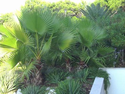 FOTKA - Bujně rostoucí palmy