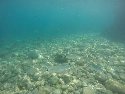 FOTKA - Ryby v Jadranu
