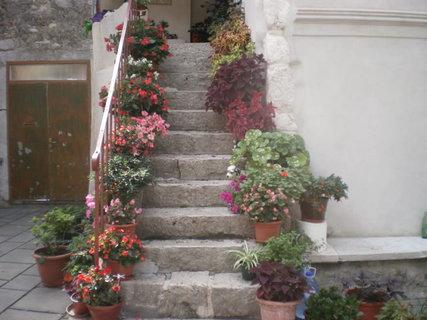 FOTKA - Schodiště s květinami