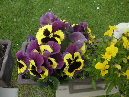 FOTKA - květiny zahrada