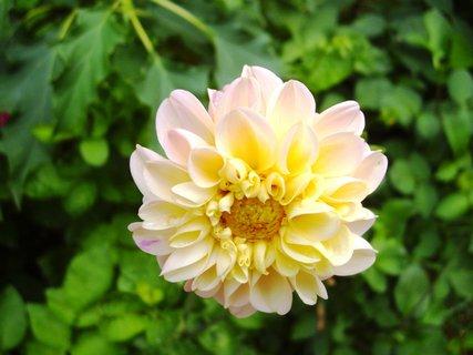 FOTKA - detail květu jiřinky