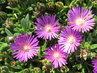 květy..foto srpen