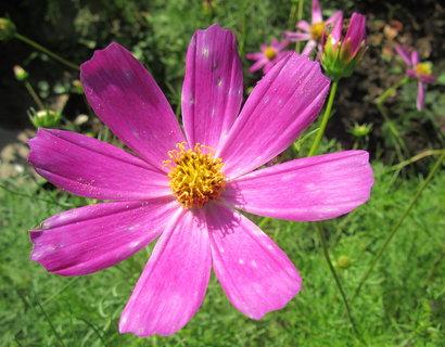 FOTKA - ..květ