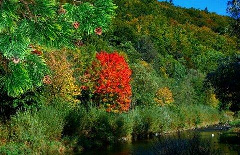 FOTKA - podzim v barvách...