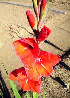 FOTKA - červený se světlým okrajem