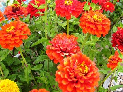 FOTKA - stále kvetou