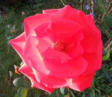 FOTKA - tmavší růžová