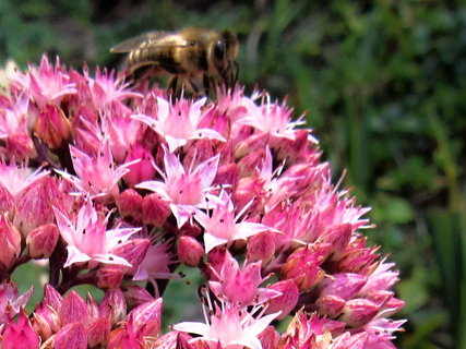 FOTKA - sedla na květ