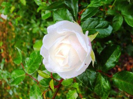 FOTKA - s růžovým nádechem