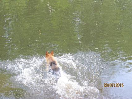 FOTKA - Skok do vody