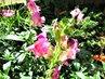 desátého října na zahradě
