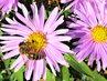 i včelce se líbí