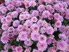 to je květůů