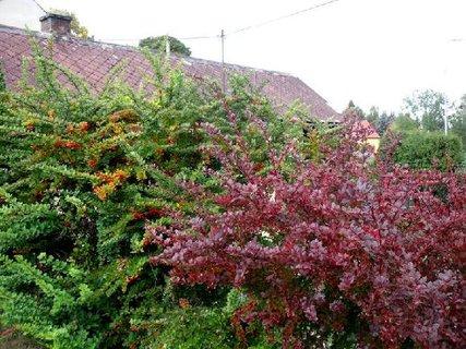 FOTKA - pestrobarevný podzim