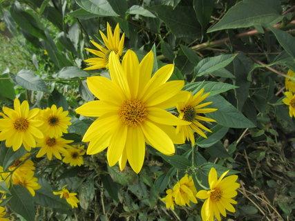FOTKA - žluté..podzimní