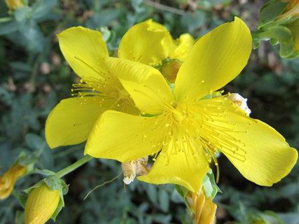 FOTKA - tyhle kvetly v září