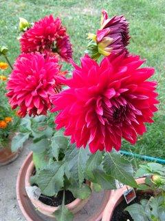 FOTKA - květináč