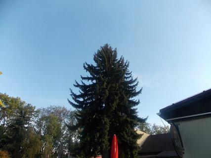 FOTKA - čisté modré nebe a vrchol stromu