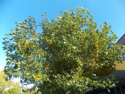 FOTKA - koruna stromu