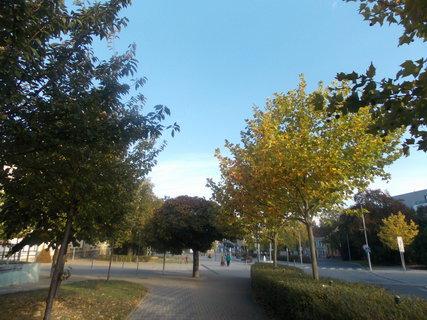 FOTKA - Cesta do města lemovaná stromy