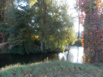 FOTKA - Voda, stromy