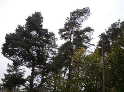 FOTKA - stromy se chvějí ve větru