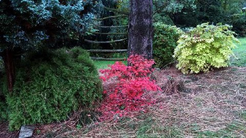 FOTKA - Barvy podzimu
