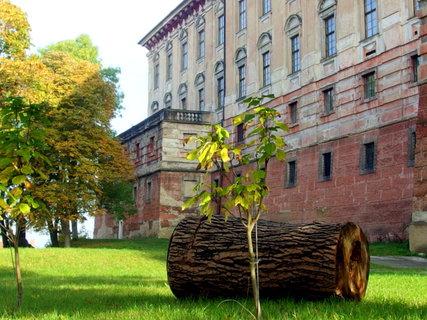 FOTKA - Nový stromek místo poraženého