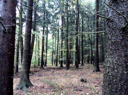 FOTKA - Podzimní les .