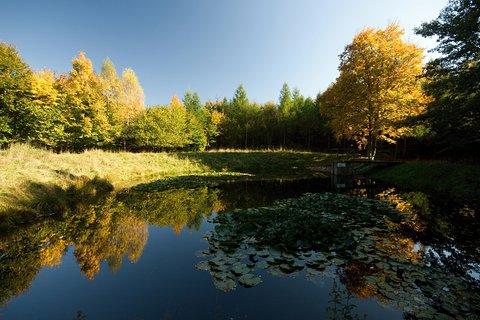 FOTKA - Leknínový rybníček