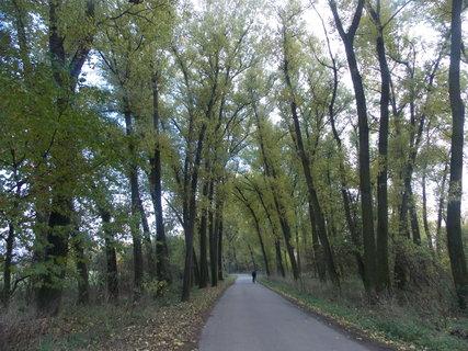 FOTKA - Cyklostezka zahalená stromy